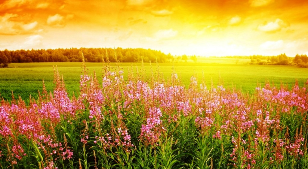 sunrise-picture